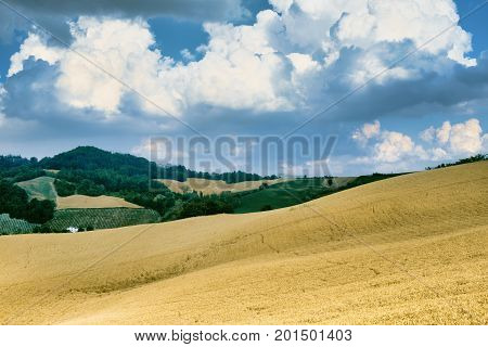Rural landscape at summertime along the road from Santa Maria della Versa to Carmine (Pavia Lombardy)