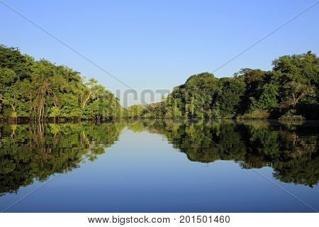 Amazon the Amazon Rainforest Amazonas jungle rainforest forest nature photography nature wilderness Brazil Manaus vegetation lush exotic tropical tropic green reflections water reflections blue sky