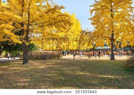 Seoul, Korea - November 2, 2014: Autumn Leaves At Gyeongbokgung Palace, November 2, 2014 In Seoul, S