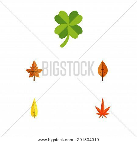 Flat Icon Foliage Set Of Maple, Alder, Leafage And Other Vector Objects