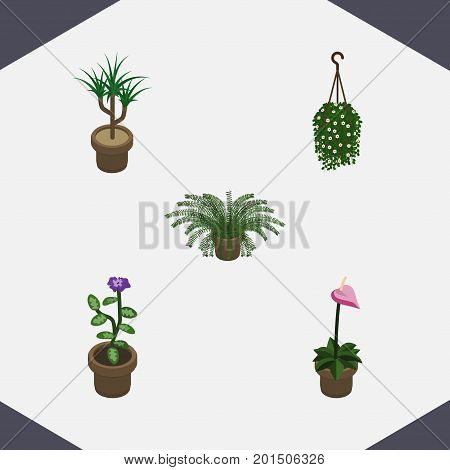Isometric Houseplant Set Of Plant, Flower, Grower And Other Vector Objects