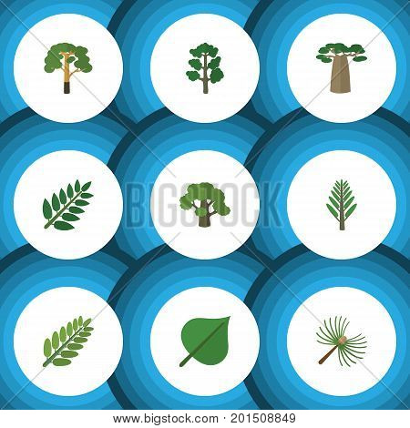 Flat Icon Bio Set Of Wood, Jungle, Baobab And Other Vector Objects