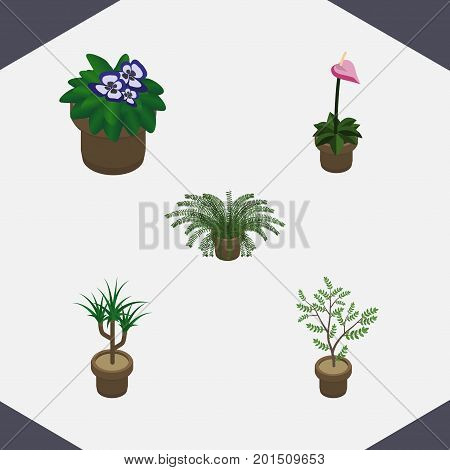 Isometric Plant Set Of Grower, Houseplant, Flowerpot And Other Vector Objects