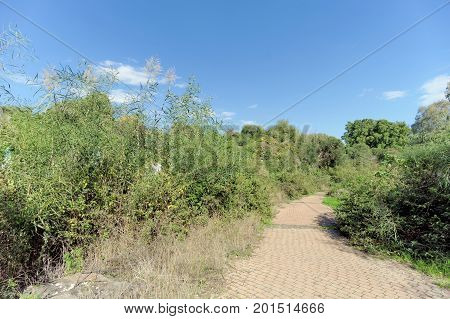 A paved path among green bushes in Israel. A place for a leisurely walk.