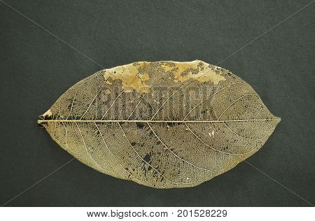 dry leaf decompose structure on black fabric background