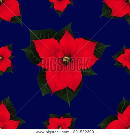Red Poinsettia on Navy Blue Background. Vector Illustration.