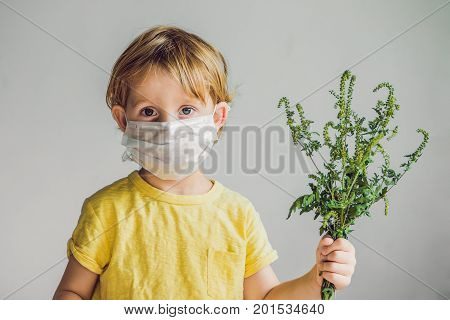 The Boy Is Allergic To Ragweed. In A Medical Mask, He Holds A Ragweed Bush In His Hands. Allergy To