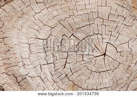 Weathered and cracked old brown tree trunk surface with annual rings close-up as background. View from above