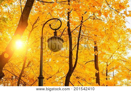Autumn leaves landscape. Bright autumn landscape - golden autumn trees with golden autumn leaves and metal park lantern against yellowed autumn leaves. Nature scene with golden autumn leaves in the park