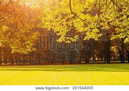 Autumn background with golden autumn trees in soft sunlight. Background of autumn trees in sunny autumn park lit by sunshine. Sunny autumn background with space for text. Yellowed autumn trees - colorful autumn background