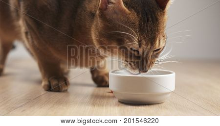 abyssinian cat eating meat from bowl on table, wide photo