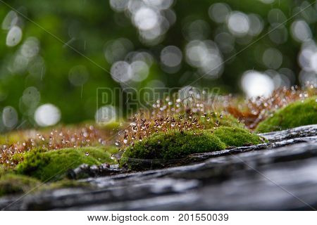 Moss on tiled roof macro photo with selective focus shot in Keswick UK