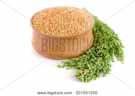 Millet in wooden bowl with green spikelets isolated on white background. Food for parrots.