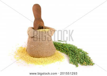 Millet in a bag and scoop with green spikelets isolated on white background.