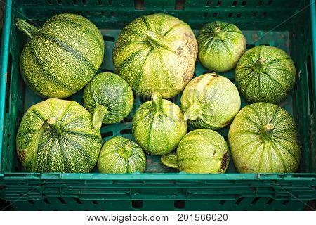 Young acorn green squash in green container on food market