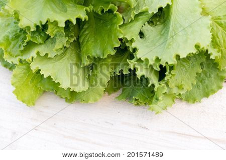 Green lettuce leaves. Lettuce leaves wooden background. Fresh lettuce on kitchen table. Healthy organic food.