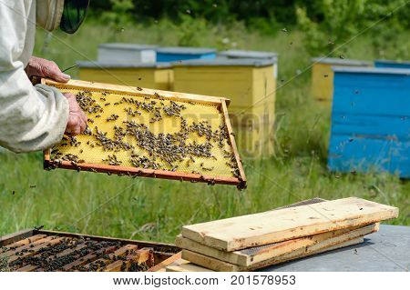 The beekeeper works on an apiary. Apiary.
