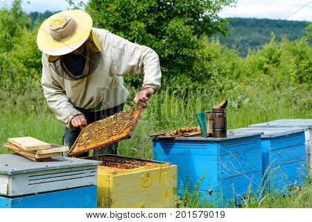 The beekeeper works on an apiary. Apiary