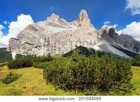View of Monte Pelmo with mountain pine South Tirol Dolomiten mountains Italien European Alps