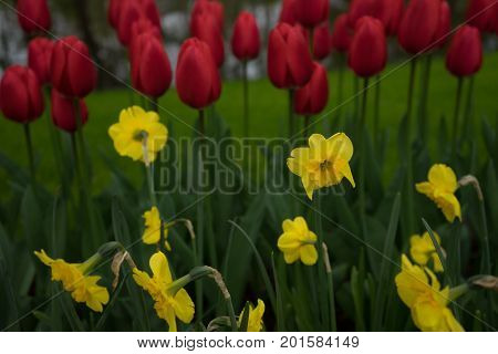 Beautiful colourful tulip flowers with beautiful background on a spring day