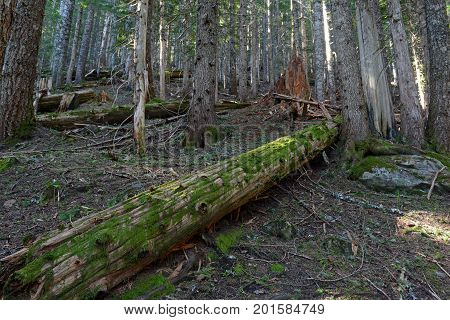 Woods and Hiking trail in a coniferous forest, near Portland Oregon