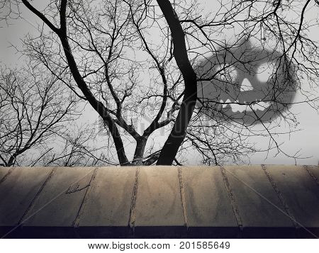 Perspective empty surface on silhouette of dead tree with evil shadow background. Use as a mock-up template, or Halloween product montage, backdrop.