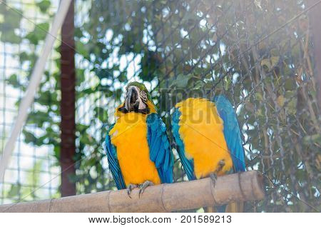 Two Parrots At The Zoo