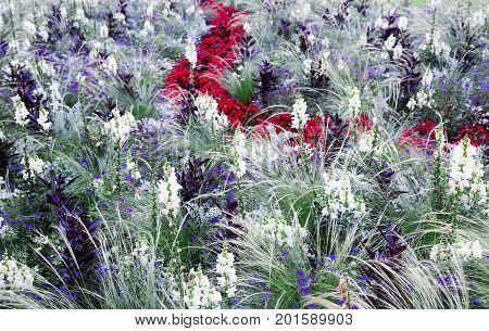 Summer herbal meadow with white, violet and red flowers