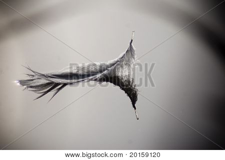 peaceful feather