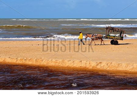 Beach of the Natives, Trancoso, Bahia, Brazil. July 29, 2017: Seller of pineapples with his wagon on the Nativos beach, near the mouth of the river Trancoso.