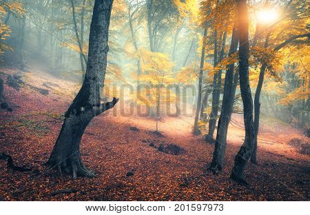Fairy Forest In Fog. Fall Woods. Enchanted Autumn Forest In Fog