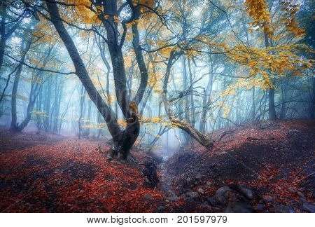 Autumn Foggy Forest. Mystical Autumn Forest In Blue Fog