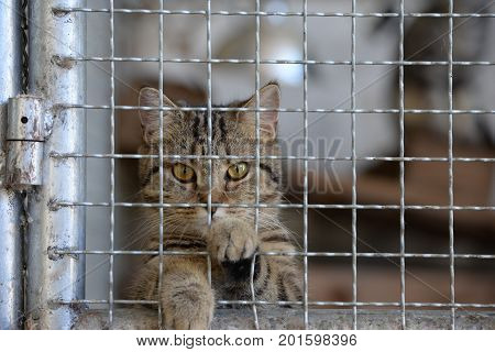 Homeless animals series. Tiny tabby kitten in a cage looking at camera out through the bars for freedom.