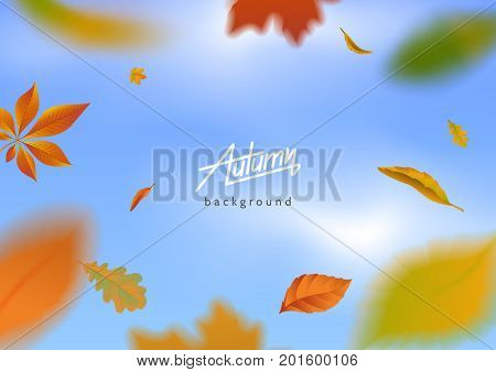 Falling autumn leaves on blue sky background. Motion blur effect. Flying autumnal foliage around the text. Applicable for banner posterflyer advertising. Vector eps 10.