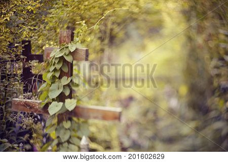 Blurry background with a wooden cross an overgrown ivy. It is photographed in the Free-Lensing equipment.