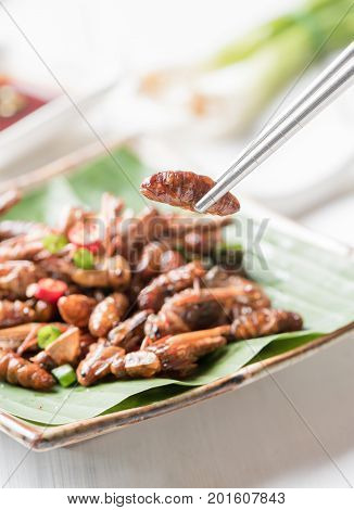 Fried Larva On Chopsticks, Edible Insect Eating