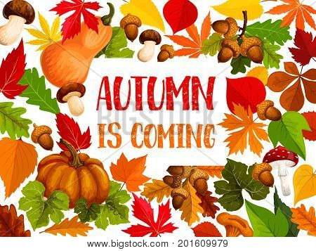 Autumn leaf and fall harvest vegetable welcome banner. Orange maple leaves, pumpkin, red chestnut foliage, acorn branch, amanita mushroom, chanterelle and cep poster template for autumn holiday design