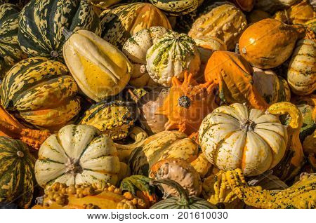 A mixture of gourds, pumpkins and squash