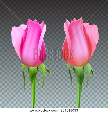 Realistic roses Bud with stem and leaves. Closeup, isolated on transparent background the flower Bud of the rose. The symbol of romance and love, a template for a greeting card, 3D illustration.