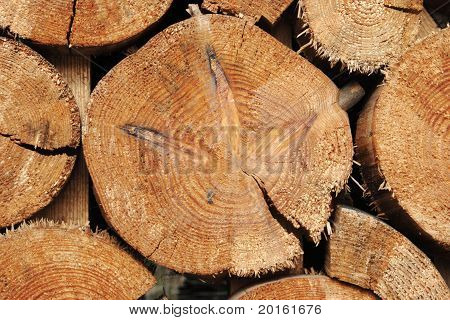 Forestry Industry Tree Felling And Timber Logging