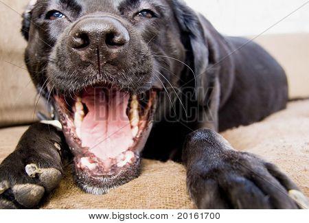 talking dog poster