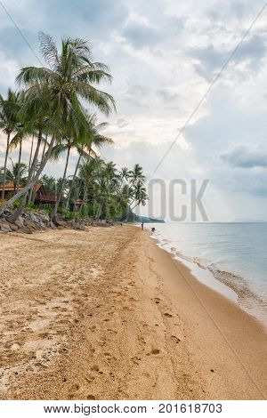 Sandyr Beach At Evening With Coconut Palm Trees Line