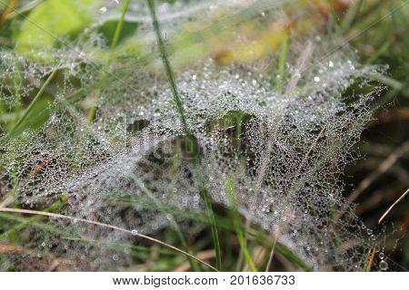fragile pure white thin lace spider web stretched on green grass