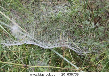 white fragile lace masterpieces of spider thin spidercob on grass for trap