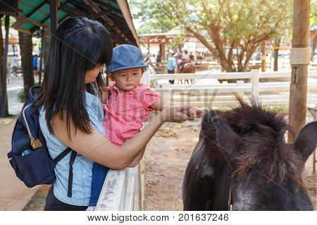 Asian beautiful mother is take care your cute baby touch fur hair horse in the farm Activities family to enhance the learning experience of children.