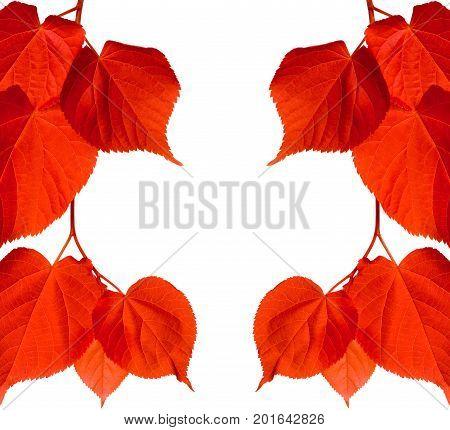 Red Tilia Leaves