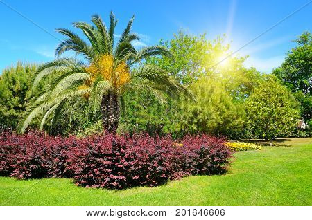 Summer park with tropical palm trees flower beds and lawns.