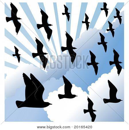 flocking birds with cloudburst