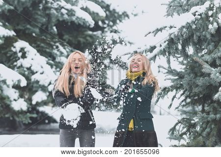 Happy sisters playing snowballs in forest on winter day. Women or girls smiling with long blond hair on white snow landscape. Active lifestyle and vacation. Christmas and new year concept.