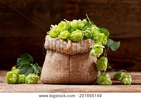 Fresh Green Hops In Sack